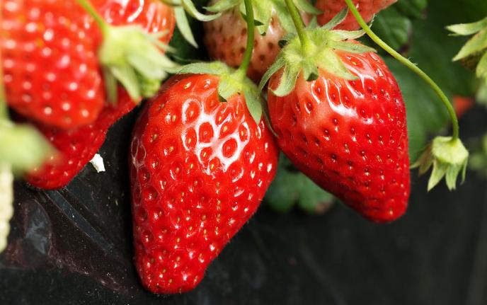 全球公认最刮油的十大水果,分分钟消灭你的肥肉!!
