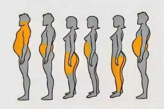 局部减肥之迷思
