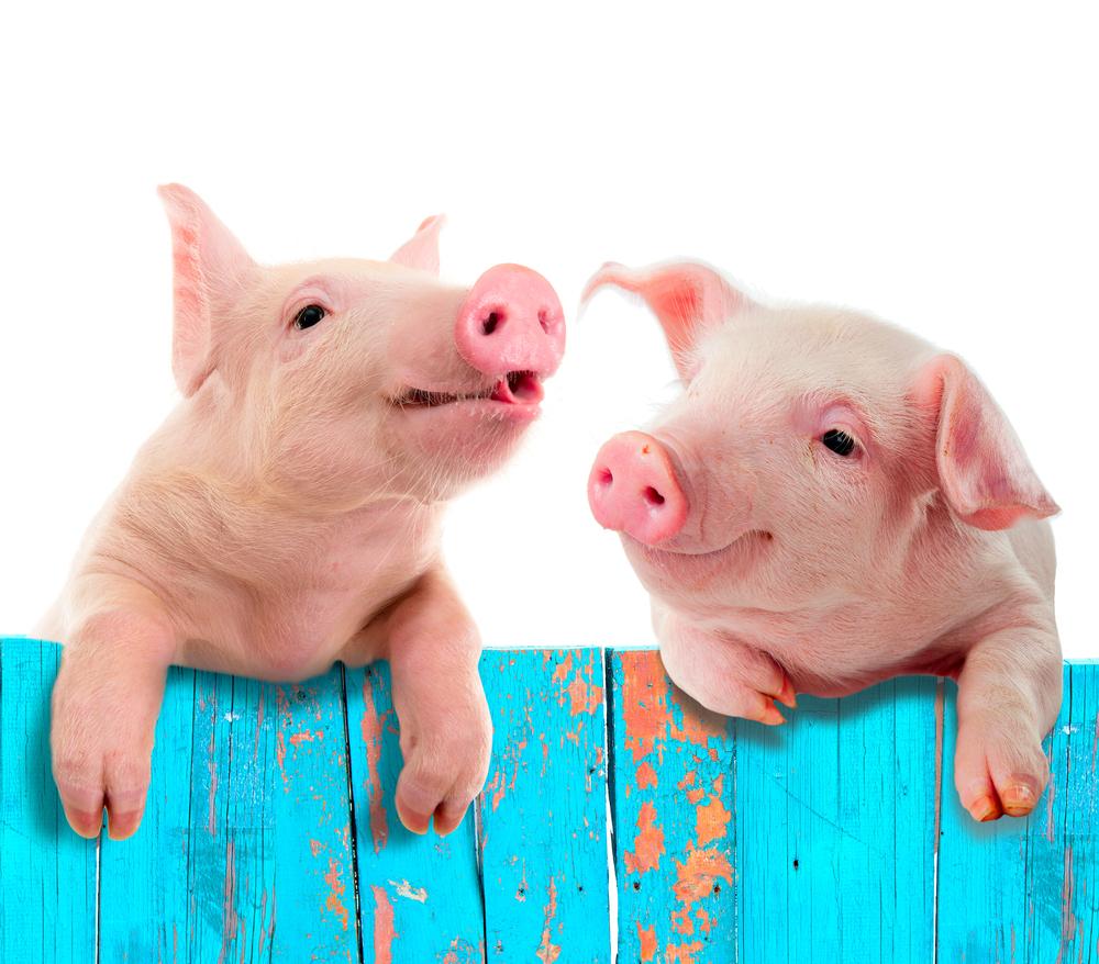 """请谢谢那个说""""祝你瘦的像头猪""""的人"""